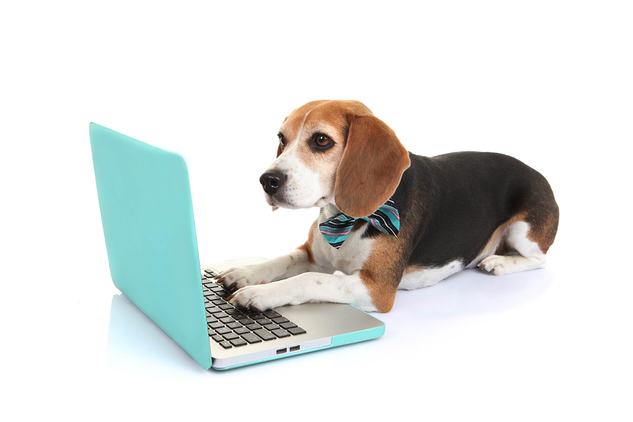 Keep up to date on the latest and greatest Beagle news!