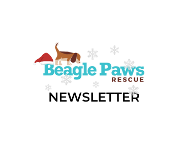 Did you miss December's Beagle Paws Newsletter?
