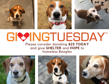 Will you join us on December 3 to GIVE Beagles SHELTER and HOPE?