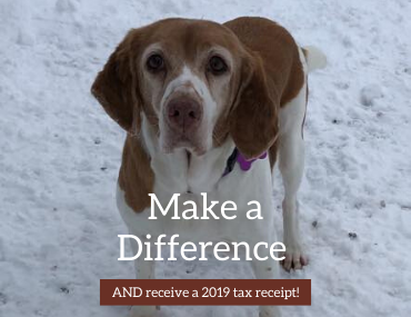 There is still time to make a difference and receive your 2019 tax receipt!